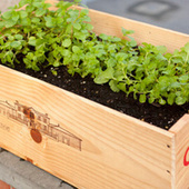 Repurpose a Wooden Wine Crate Into a Planter | Vertical Farm - Food Factory | Scoop.it