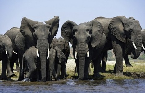 Poacher killed by Botswana army | Wildlife Trafficking: Who Does it? Allows it? | Scoop.it