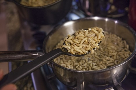 Bugs — It's What's for Dinner | Entomophagy: Edible Insects and the Future of Food | Scoop.it
