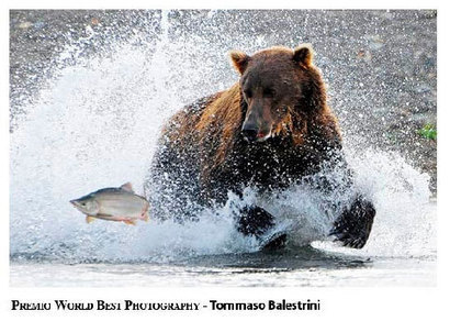 """Wonderful Photos Gallery: Wildlife And Nature Photography 