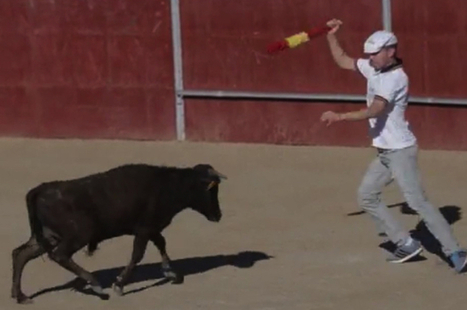 Baby Cows Forced To Fight — And Die — In Bullfights | Anonymiss 68 | Scoop.it
