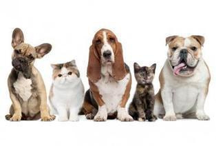 How Insurance Information Providers Can Help In Getting Pet Insurance in South Africa | ProfiCredit Insurance Solutions | Scoop.it