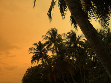 Coconuts: not indigenous, but quite at home nevertheless | Thoughtomics, Scientific American Blog Network | AnnBot | Scoop.it
