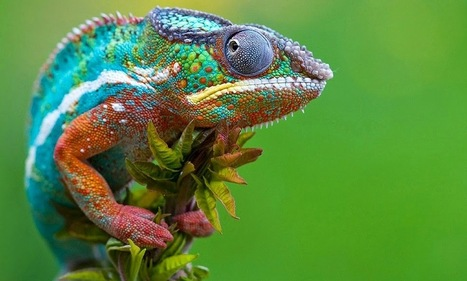 Chameleon crystals could enable active camouflage | Tracktec | Tracktec | Scoop.it