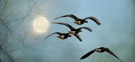Lessons from Geese: A Better Way to Lead | Coaching Leaders | Scoop.it