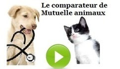 Mutuelle Chat : Meilleure Assurance Animaux | mutuelles | Scoop.it