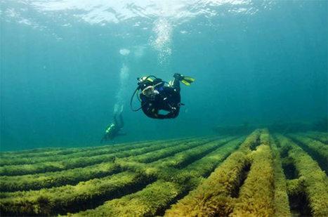 SDI Wreck Diver Solves Maritime Mystery | SDI | TDI | ERDI | SCUBA | Scoop.it
