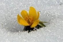 Wie Pflanzen der winterlichen Kälte trotzen   Wissenschaft   Scoop.it
