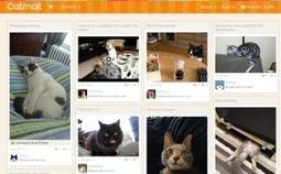 Un réseau social pour les chats | i'monwatch | Scoop.it