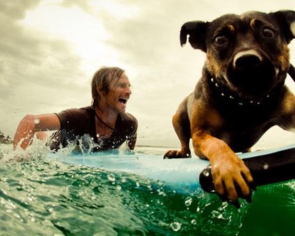 11 unforgettable surfing photos: Pepper the dog | Salt Water Divas | Scoop.it
