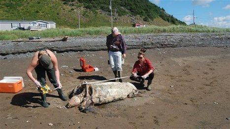 (Encore) Une tortue menacée tuée par un sac deplastique | Zones humides - Ramsar - Océans | Scoop.it