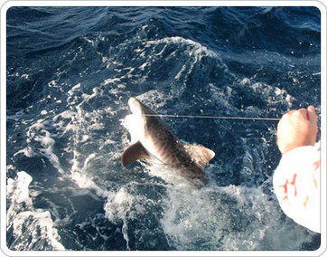 Nomad Fishing Charters - Miami, FL | Miami fishing charter | Scoop.it