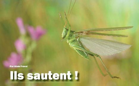 Ils sautent ! | EntomoScience | Scoop.it