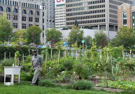 Urban farming starting to take root in Montreal   Vertical Farm - Food Factory   Scoop.it