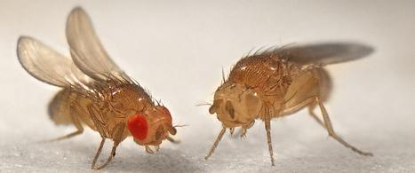 Un insecte pourrait changer l'avenir des scientifiques africains | GREENEYES | Scoop.it