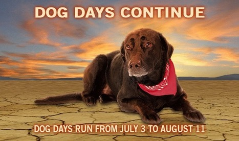 """Wet Dog Days of cool summer   Buffy Hamilton's Unquiet Commonplace """"Book""""   Scoop.it"""