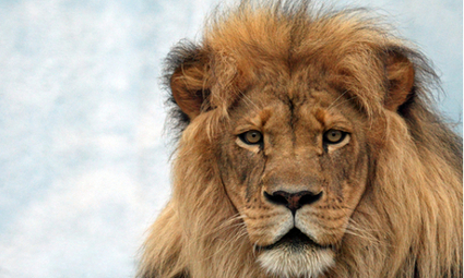 Loss of Large Carnivores Poses Global Conservation Problem | EcoWatch | EcoWatch | Scoop.it