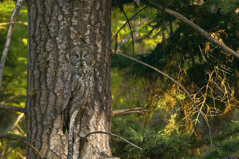 PHOTOS: Can You Spot The Camouflaged Animals? | Xposed | Scoop.it