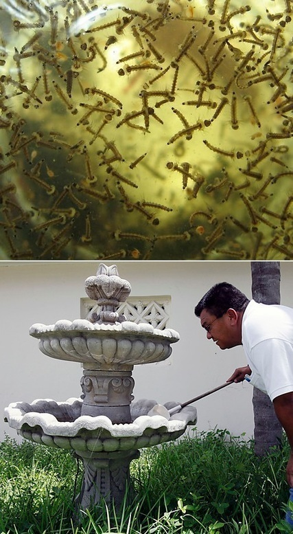 How to stop mosquitoes from breeding in my fountain | Backyard Gardening | Scoop.it