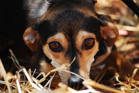Applaud Classification of Animal Cruelty as Top-Tier Felony | GarryRogers NatCon News | Scoop.it