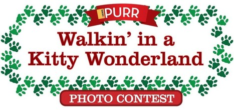 Walkin in a  Kitty Wonderland Photo Contest | Pet News | Scoop.it