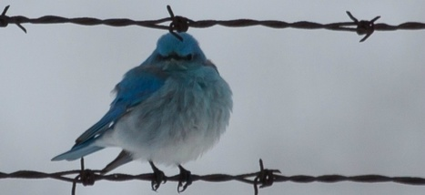 Twitter est en train de faire n'importe quoi avec votre timeline | Communication et réseaux | Scoop.it