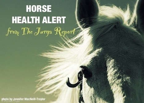Ocala HITS Show Responds to EHV Threat at Showgrounds in Florida | Horse and Rider Awareness | Scoop.it