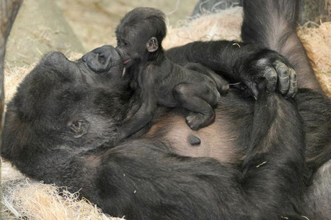 Mom, This 1 Is 4 U | Nature Animals humankind | Scoop.it