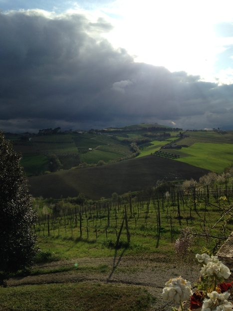 Piceno's Wines deserve more | Visiting Le Marche - Part I | Wines and People | Scoop.it