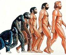 Mi cuerpo, tu cuerpo, el cuerpo humano (Primera parte) - Bitácora | INTELIGENCIA EN LA NATURALEZA | Scoop.it