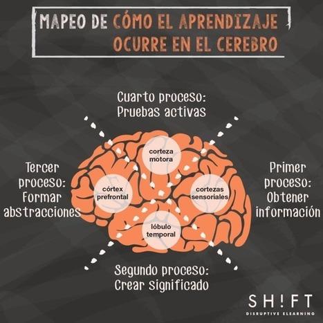 Cómo aprende nuestro cerebro: Una explicación para los profesionales eLearning | Camino al empleo | Scoop.it