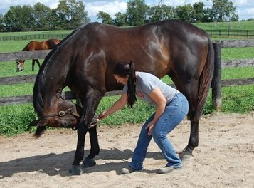Rehabilitating Horses with Back Problems - TheHorse.com | Equine biomechanics | Scoop.it