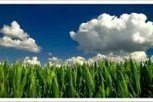 EU report questions conventional biofuels' sustainability | EurActiv | Personal Power | Scoop.it
