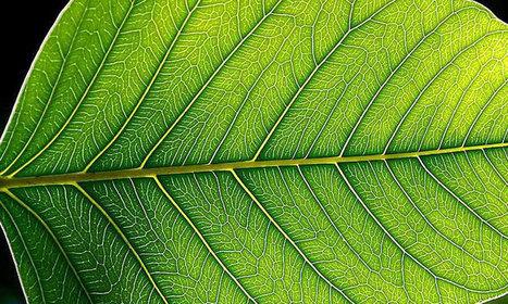 Des scientifiques triplent l'efficacité de la photosynthèse en implantant des nanotubes de carbone dans les plantes | Qualité Agro-agri | Scoop.it