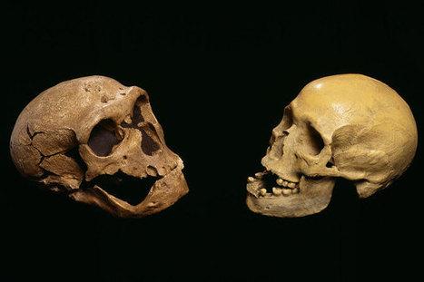 El desarrollo del cerebro es similar en el Neandertal y en el Homo sapiens, según un nuevo estudio | Arqueología, Historia Antigua y Medieval - Archeology, Ancient and Medieval History byTerrae Antiqvae | Scoop.it
