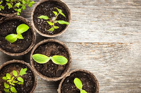 Marcas apostam em estilo e sustentabilidade | Economia Criativa | Scoop.it