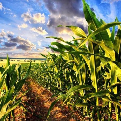 To Feed the World, We Don't Need to Grow More Food | Organic Farming | Scoop.it
