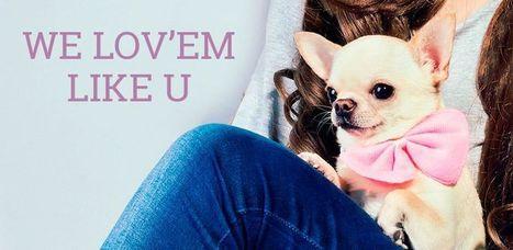 Chic4Dog Blog: abbigliamento e accessori per cani | Chic4Dog | Dog Style | Scoop.it