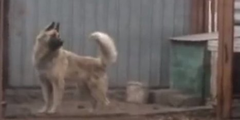 This Dog Dancing To 80s Music Is Actually Kind Of Amazing At It - Huffington Post (satire) | Science Activities | Scoop.it