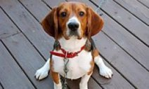 Dog Guide --- Training -- Commands: Animal Planet | cats & dogs! | Scoop.it