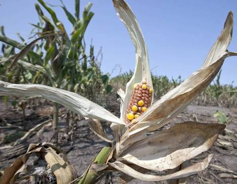 Climate change feared to create global food crisis | Sustain Our Earth | Scoop.it