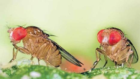 Biodiversity hopes dropping like (fruit) flies | 3B Geography | Scoop.it