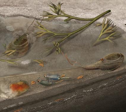 Triops et artémies avaient déjà des ancêtres très similaires il y a 365 millions d'années | EntomoNews | Scoop.it