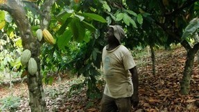 Barry Callebaut sets 2025 target for sustainable cocoa | Fair and Sustainable Trade | Scoop.it