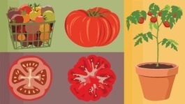 Food Hacks: Keep Your Bounty Fresher for Longer | Ghergich & Co. Top Infographics | Scoop.it