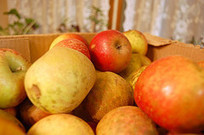 Tips for Reducing Food Waste | Sustainable Futures | Scoop.it