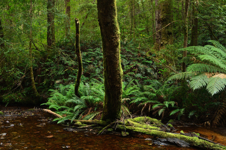 Tassie forest heritage listing could be revoked   Australia, Europe, and Africa   Scoop.it