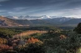 Ecólogos piden estudiar los efectos del cambio climático en los bosques | Infraestructura Sostenible | Scoop.it