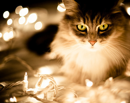 How to keep your pet safe during the holidays | Food for Pets | Scoop.it