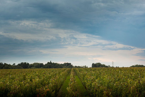 A Local's Take on What to Do in Bordeaux | Wines of Bordeaux and south-west France | Scoop.it